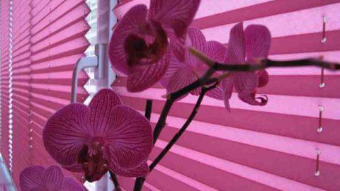 Шторы плиссе на окна: свежие решения в дизайне интерьера