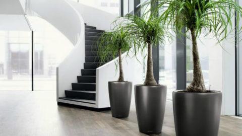 Напольные вазы в интерьере преображают жилище