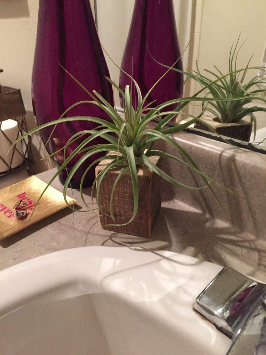 Алоэ в ванной