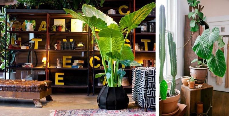 Декор с помощью комнатных растений