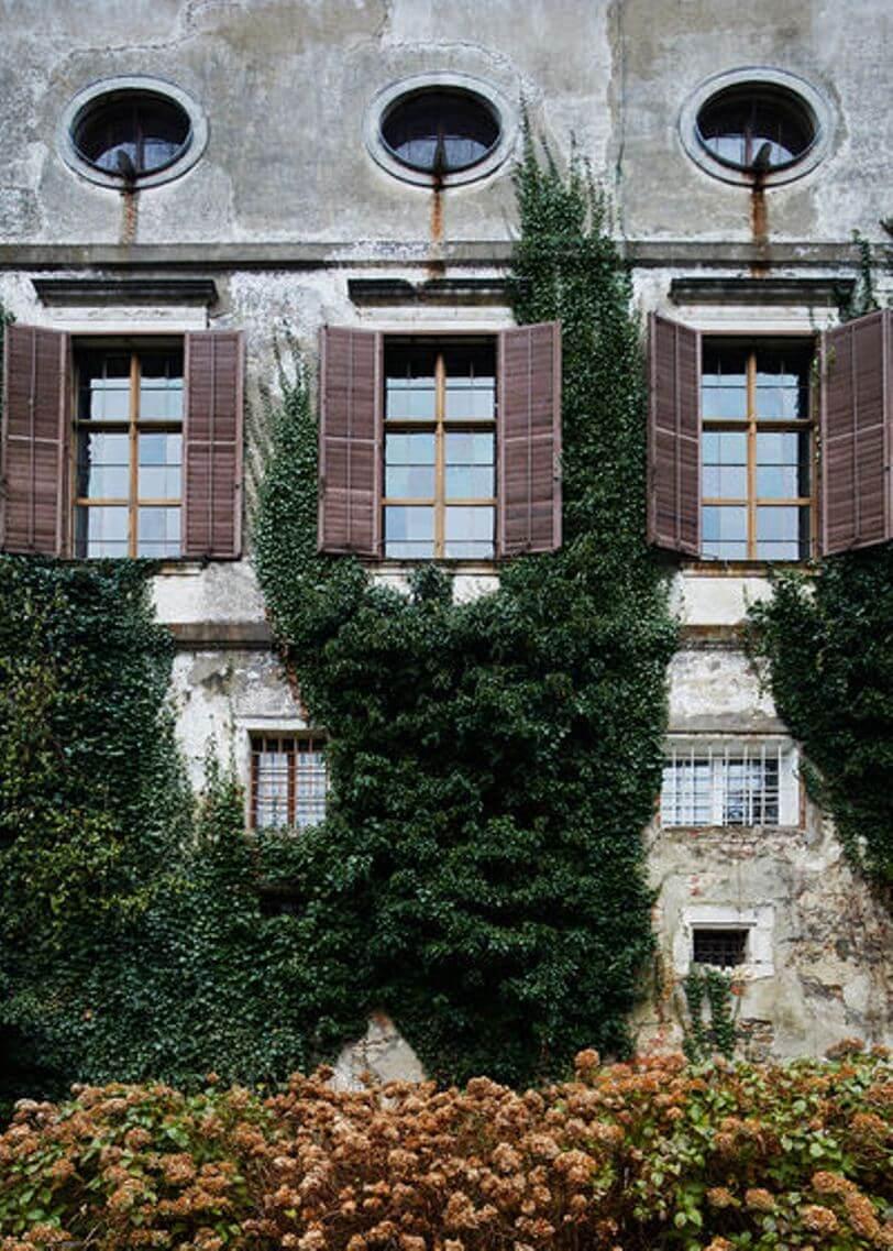 Вертикальное озеленения в архитектуре