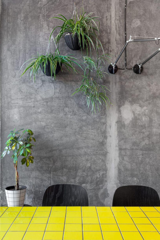 Цветы на бетонной стене